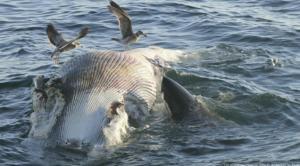 Dead Whale in the Ocean